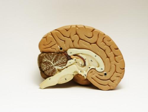 Mózg Gadzi i Racjonalny